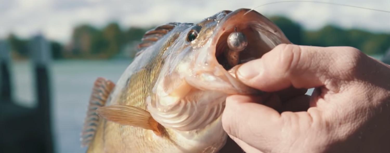 Fishtique Predatour - Namur - 26/10/19