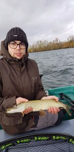 Northern Pike — Augustin Q