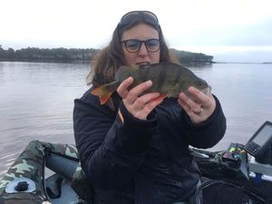 European Perch — Stéphanie GAUTRIAUD