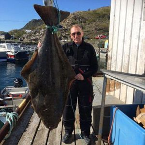 Atlantic Halibut — Mike Pinner