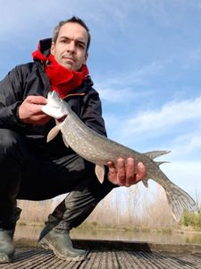 Northern Pike — Guillaume Fishbreizh