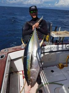 Yellowfin Tuna — gwendal sifu