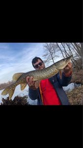 Northern Pike — Eli Levy  team no-killeurre carna