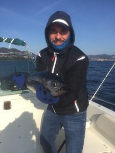 Skipjack Tuna — Stephane Finistrosa
