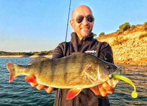 European Perch — Christophe Decours