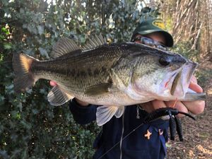 Largemouth Bass — Nicolas Sdc fishing