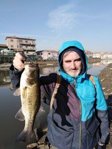 Largemouth Bass — Gigi Telloli