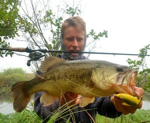 Largemouth Bass — Clément Battista