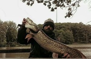 Northern Pike — Romain Joyas