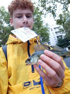 European Perch — Simon Penaranda-Miler