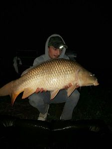 Common Carp — Axel Jax