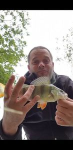 European Perch — Jackie & Mitchell Stringfishing54