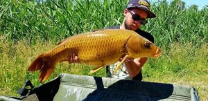 Common Carp — Aymeric chandelier