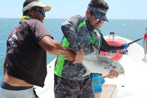 Pacific Crevalle Jack — Niels Peters
