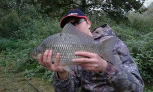Crucian Carp — Kr Fishing