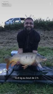 Common Carp — Florien Octor