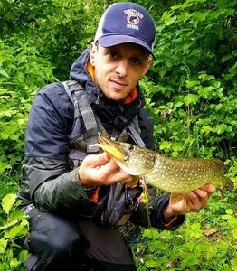 Northern Pike — Nicola Fisherman