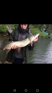 Northern Pike — Anto CarnaFish 38