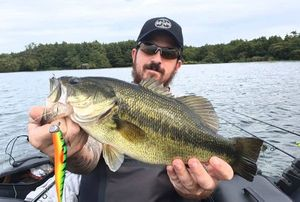 Largemouth Bass — Barbosa Carlos