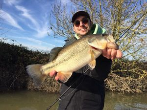 Largemouth Bass — Teddy Roger