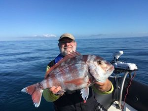 Red Porgy — PatDom HANAT