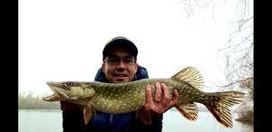 Northern Pike — Pierre Cacitti