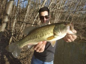 Largemouth Bass — Gabriel Valery