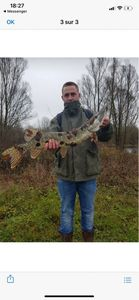 Northern Pike — Steven Nurdin