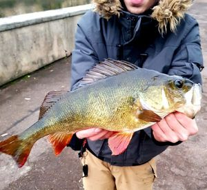 European Perch — Thibault Pechereau