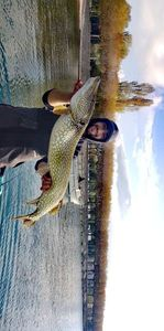 Northern Pike — Nicolas Cherpin
