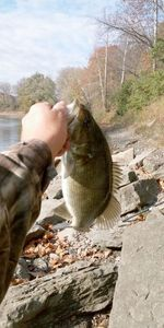 Smallmouth Bass — Mike Phelps