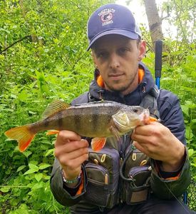 European Perch — Nicola Fisherman