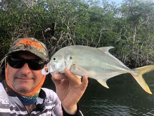 Bludger Trevally — Herve Savager's
