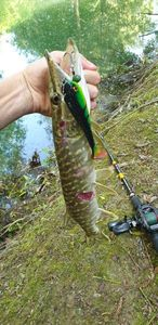 Northern Pike — Gautier Surville