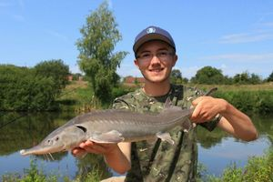 Siberian Sturgeon — Tony SIMON
