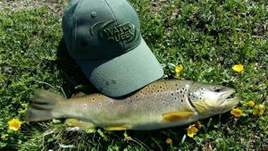 Brown Trout — Hervé  Genet