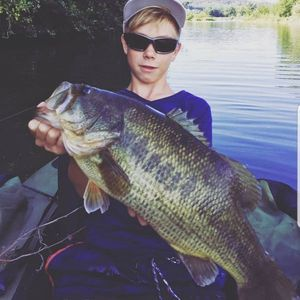 Largemouth Bass — Ylan Hennebert