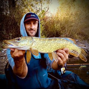 Northern Pike — Matthieu Marchandise