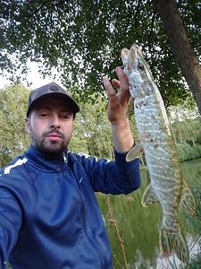 Northern Pike — Loic Bardyn