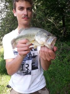 Largemouth Bass — Hugo Salas