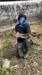 Northern Pike — Thisma fishing