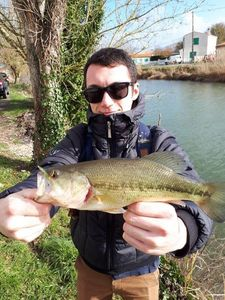 Largemouth Bass — Adrien Sarazin