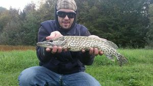 Northern Pike — Giacomo Polese