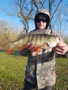 European Perch — Steven Nurdin