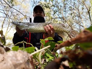 Northern Pike — Mickael Alain
