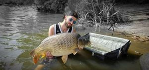 Common Carp — Guillaume Caro