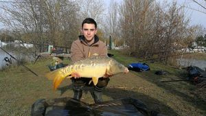 Mirror Carp — Guillaume  Burgan