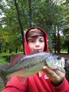 Largemouth Bass — Raphaël Ferreira