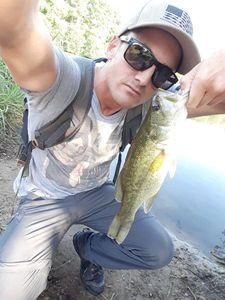 Largemouth Bass — Kevin JM