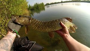 Northern Pike — David Peron